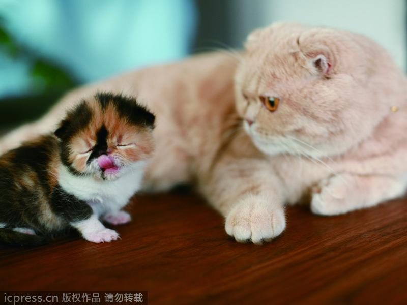 可爱 日本 眼神/日本最可爱小猫超萌眼神治愈心灵(12/12)
