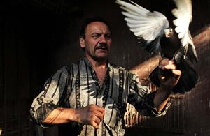 纪实摄影:俄罗斯鸽子