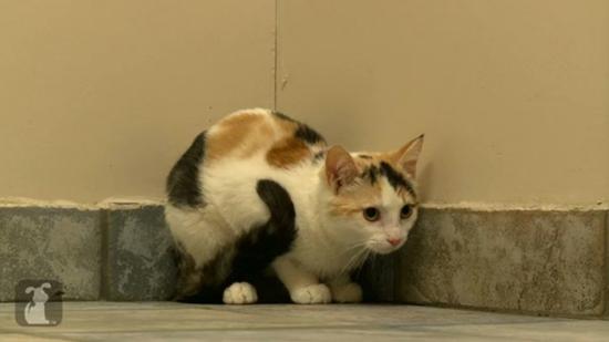 壁纸 动物 狗 狗狗 猫 猫咪 小猫 桌面 550_309