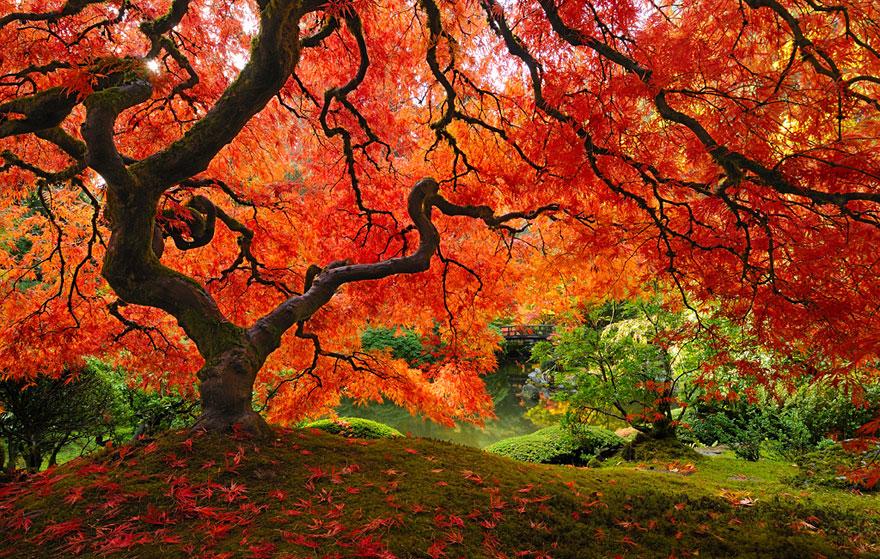 转贴 -深红色的秋景 - 山水号子 - 山 水 号 子