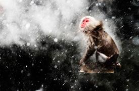 2013年野生动物摄影大赛获奖作品欣赏