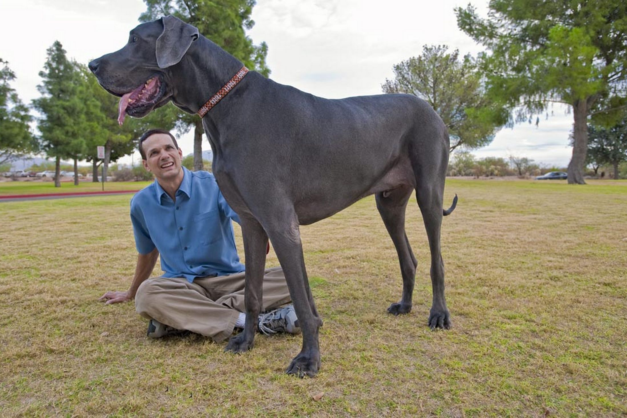 Pictures Of The Largest Dogs