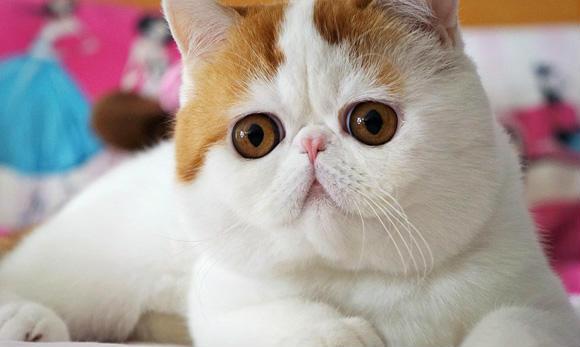壁纸 动物 猫 猫咪 小猫 桌面 580_347
