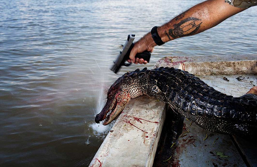Louisiana Gator Hunting Tours
