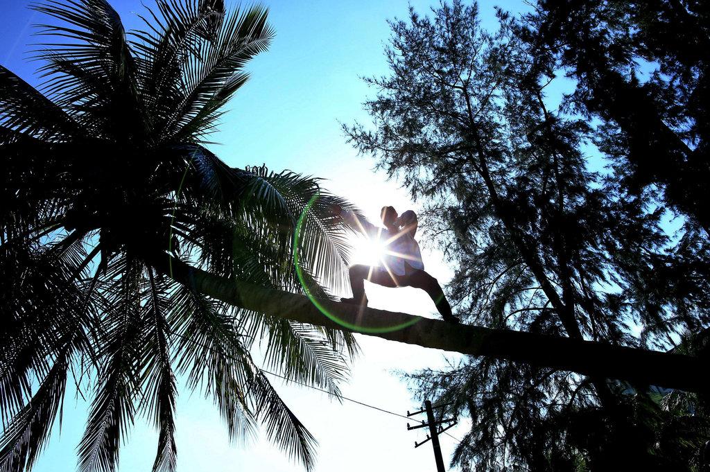 """2013年10月30日,近日,在海南大学校园内一名站在椰子树上练功的""""神人 """"在网上走红。今天,记者现场目睹这位""""神人""""的了得功夫。其进行简短 热身后,快速""""飞奔""""上椰子树,进行单脚独立或展臂双飞动作练武功,足 有20多分钟,其神情泰然自若吸引不少围观者。   据了解,该男子名叫符春福,海南儋州人,从小9岁就开始练习功夫,曾在 某项武术比赛取得优异的成绩,目前已收了40多名徒弟。对于许多喜爱功夫 的爱好者如何掌握好功夫,符春福寄语"""