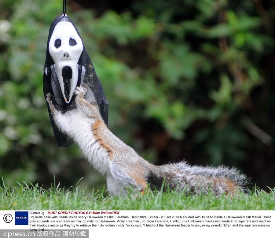 松鼠为万圣节疯狂 戴 鬼面具 吓破你的胆