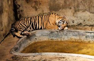 纪实摄影:动物园里的居民