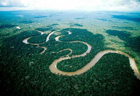 社会资讯_亚马逊森林砍伐率急剧上升 或将面临消失危险_公益_环球网
