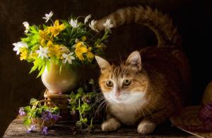 动物摄影:油画里的喵星人