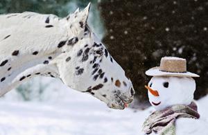 风光摄影:雪冬