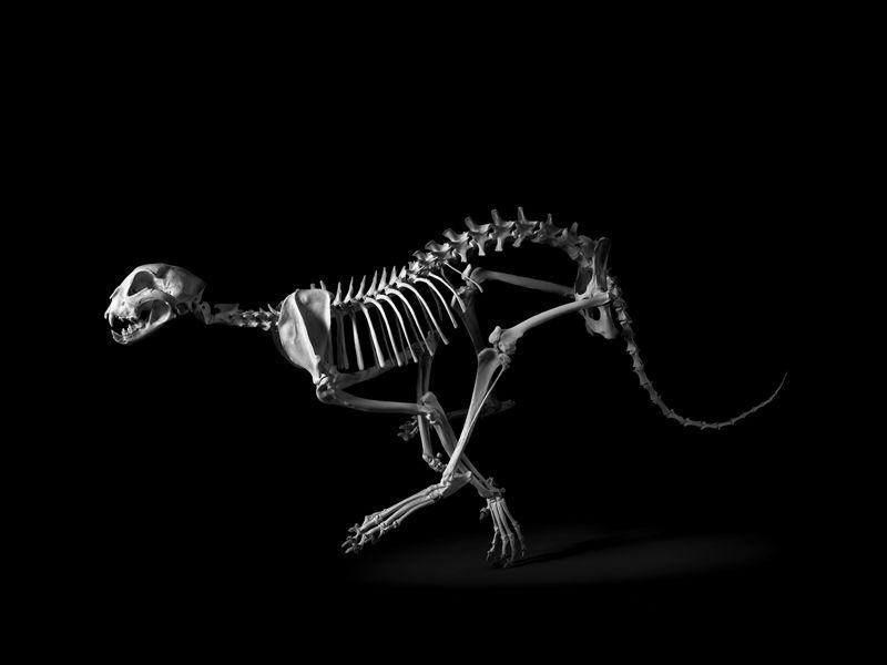 观念摄影:evolution(进化)