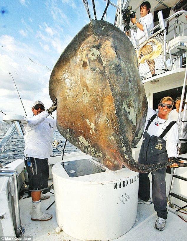 美佛州渔民捕到重逾700斤海怪