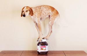 """动物摄影:""""站街犬"""""""