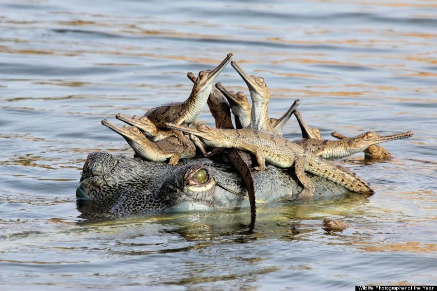 BBC年度野生动物摄影师奖