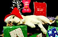 萌犬们的圣诞愿望