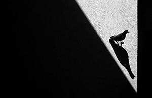 观念摄影:影子舞
