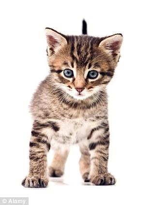 英国专家研究称宠物猫将主人视作同类