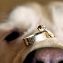 2013最值得借鉴的创意结婚照