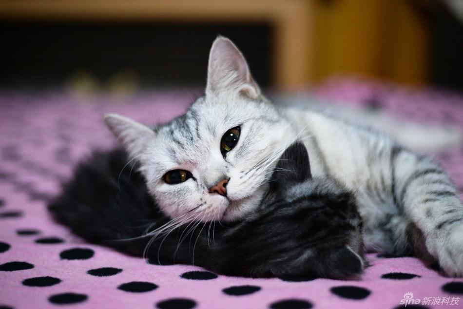 壁纸 动物 猫 猫咪 小猫 桌面 950_634