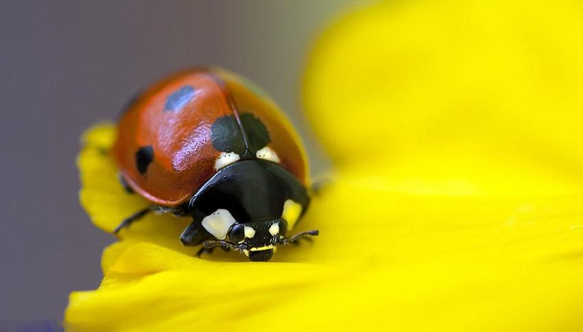 国际摄影大赛展现野生动物生命美