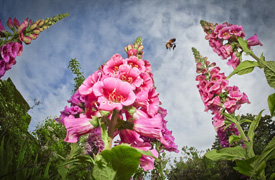 2013英国皇家园艺学会摄影大赛优秀作品