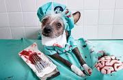 动物摄影:一只冠毛犬的奇遇