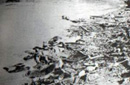 长江边尸体堆积的场面