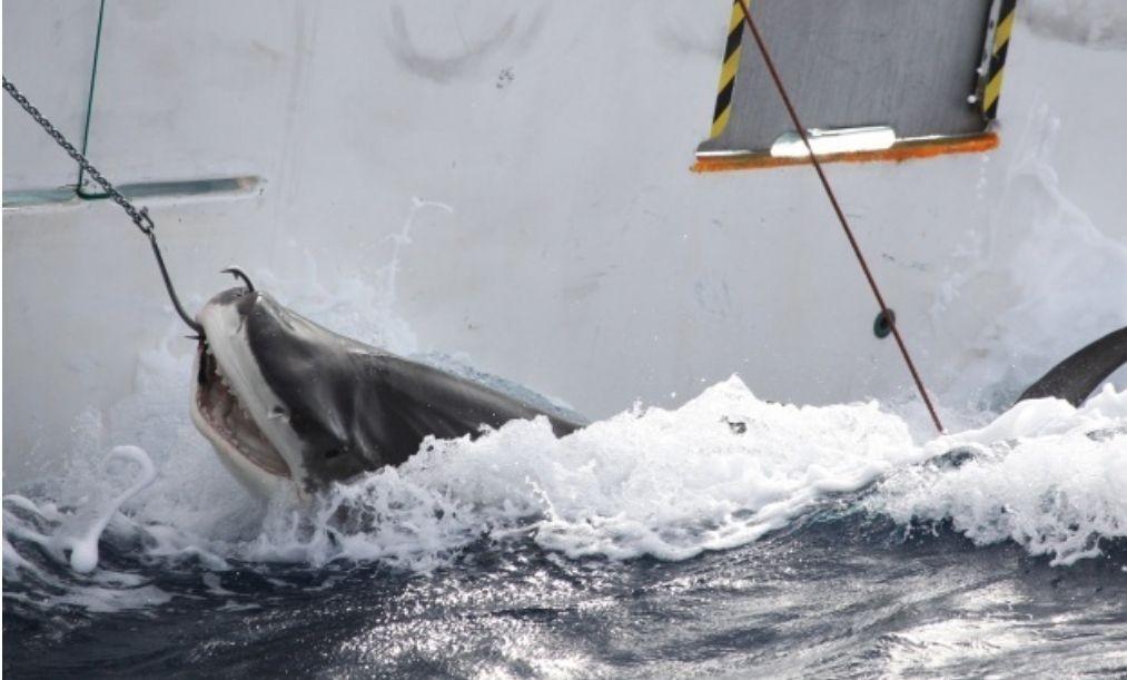 鲨鱼种类图片大全;