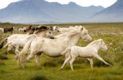 动物摄影:马语者