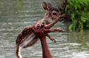 少年河流中潜游救小鹿 单手托举助其上岸(组图)