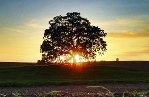 风光摄影:致橡树