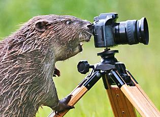 【2013·环球影像】动物摄影师