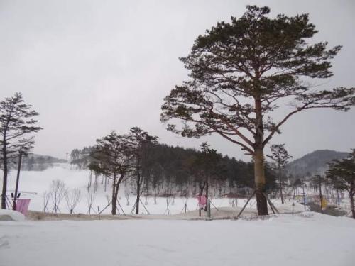 韩国东海岸暴雪部分村庄交通中断 学校被逼停课