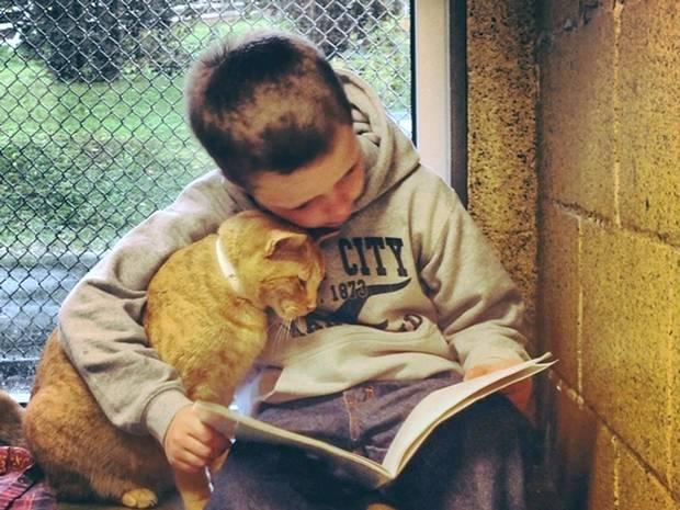 美儿童为流浪猫朗读 锻炼能力又献爱心