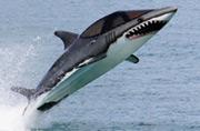 美军战斗机被改造成鲨鱼快艇