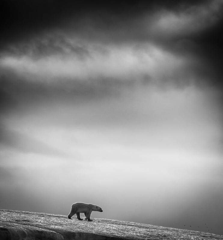 ...摄影师wilfred berthelsen在斯瓦尔巴特群岛拍摄的展示了一组...