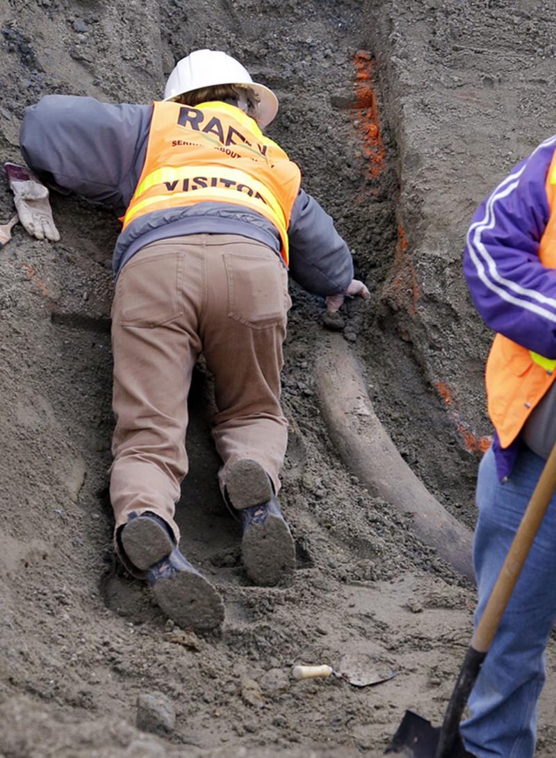 万年/一名古生物学者称,这根象牙的历史在2.2万年到6万年之间。(...