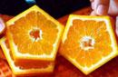 日农民培育五角形橙子
