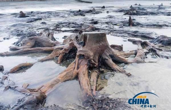 英5000年前森林被刮出