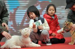 中国2月电影票房创新高