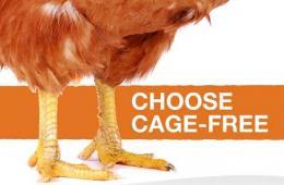 世界动保协会呼吁在禽流感疫区关闭活禽市场