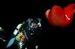 组图:影师拍摄红海海底奇异的生物