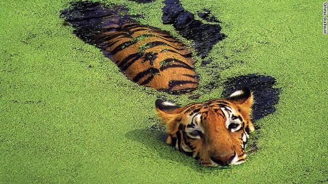 全球濒临灭绝的野生动物_旅游_环球网