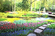 世界上最美的五处赏花地 荷兰库肯霍夫