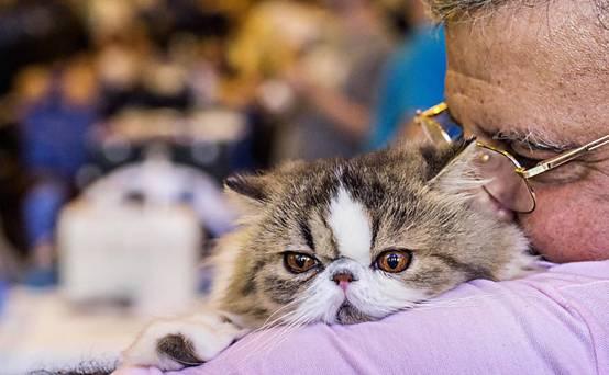 壁纸 动物 猫 猫咪 小猫 桌面 554_342