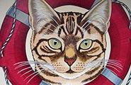 猫城猫岛 发现八处喵星人天堂