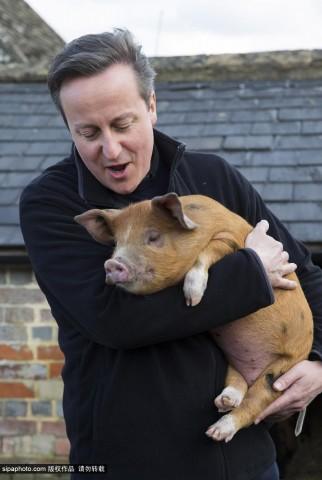 卡梅伦日猪是真的吗_卡梅伦视察农场捐赠小猪