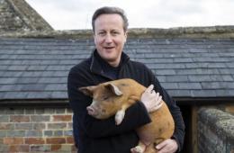 """卡梅伦视察农场捐赠小猪 怀抱""""爱猪""""展亲切温柔"""