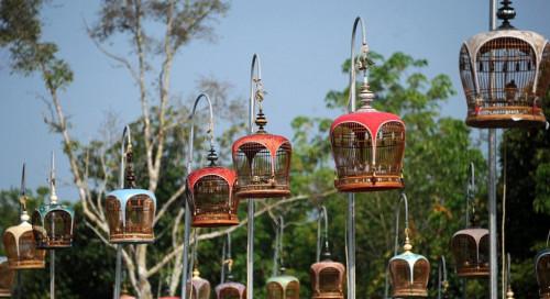 泰国举办鸟儿歌唱大赛 数百人带宠物参加