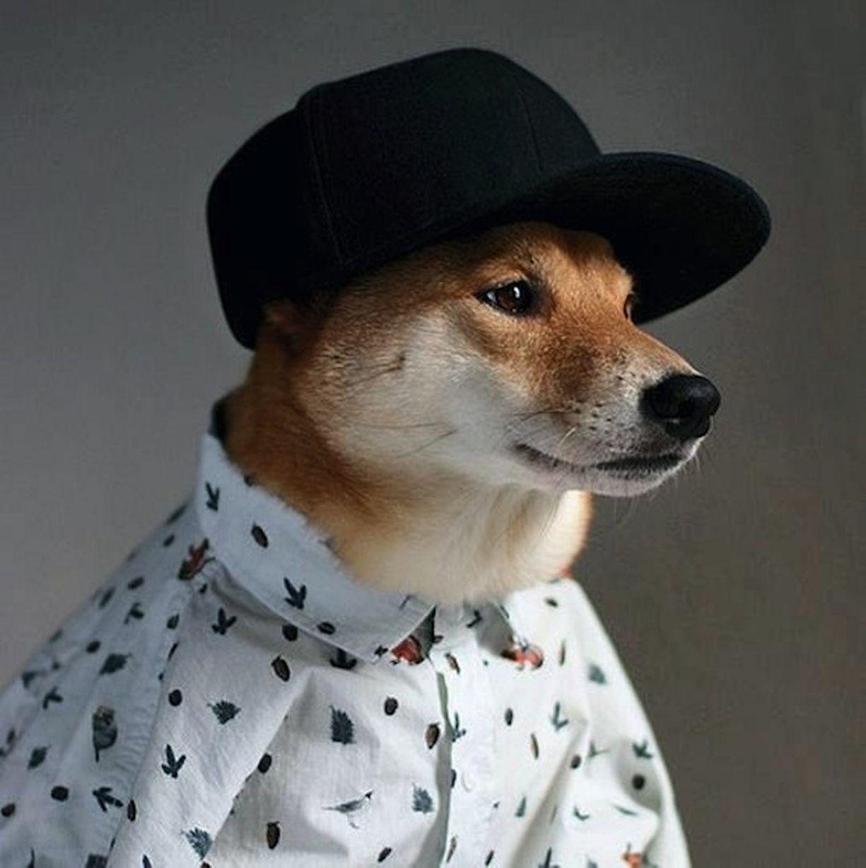 【环球网综合报道】一般潮男服饰的穿搭是由超级名模来示范的,让消费者看过后,也有希望自己穿上也能同样帅气的冲动。但是,据英国《镜报》3月24日报道,美国纽约的一对服装设计搭档却让自己的爱犬担任模特儿,试穿各款炫酷男装,获得网友们的一致好评。   据悉,29岁的钟大卫(David Jung)和27岁金艺娜(Yena Kim)是美国纽约一对从事服装设计的搭档。有一天,他们路过一家宠物店时,看上了颇有明星范儿的柴犬菩提(Bodhi),于是将它带回家。后来,他俩突发奇想,让爱犬菩提来担任模特儿,为它穿搭各种潮男